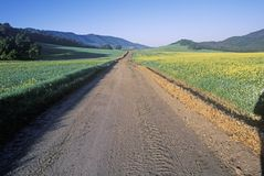 Sunrise on a mustard field and spring road in Ojai, California Royalty Free Stock Photos