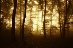 Sunrise in a mysterious enchanted forest with fog Stock Photo