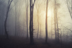 Sunrise in a mysterious forest with fog Stock Photos