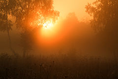 Sunrise. Nara River. Russia. Fantastic forest in a mist Royalty Free Stock Photography