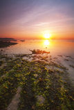 Sunrise near a beach with red and green seaweeds in Bali, Indonesia. Stock Photos