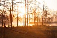 Sunrise near forest lake Stock Photos