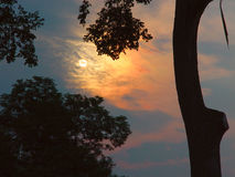 Sunrise in new england. Sunrise seen through some old trees, esathampton, massachusetts, new england Royalty Free Stock Photo