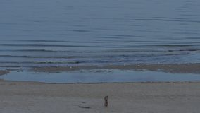 Sunrise on a northern baltic beach. 4K UHD. Sunrise on a northern baltic beach. 4K UHD native video stock video footage