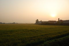 Rice paddy field by sunrise, Novara, Italy. Rice farming by the city of Novara, Piemonte, Italy. Rural landscape by sunrise, ripe crop ready for harvesting Royalty Free Stock Photography