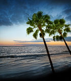 Sunrise and ocean. And palms Royalty Free Stock Photography