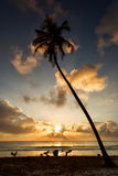 Sunrise on ocean with palm tree on a beach Stock Photography