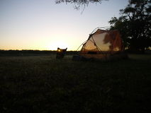 Sunrise on the Okavango delta. Tent and sunrise on the Okavango delta in Botswana Royalty Free Stock Images
