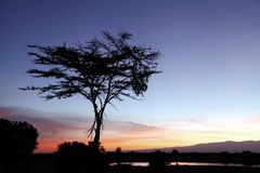 Sunrise at Ol Pejeta Conservancy. Beautiful sunrise view at Ol Pejeta Conservancy Stock Photo