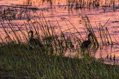 Before sunrise on olifants river in Kruger Park Stock Images