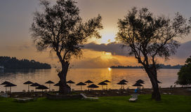Sunrise between the olive trees. Sunrise between the olive trees in Corfu Ionian Islands,Greece,Europe Royalty Free Stock Images