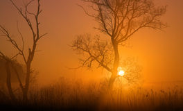 Sunrise in orange. Morning sun behind tree, monochromatic, brown and orange composition Royalty Free Stock Photography