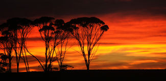 Sunrise outback. Sunrise sets the sky ablaze in the Western Australian Wheat Belt stock photography