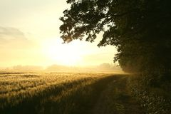 Free Sunrise Over A Field In Misty Spring Weather Silhouettes Of Trees At The Edge Of A Wheat Field With A Dirt Road Leading To The Royalty Free Stock Photo - 139264275