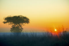 Sunrise over african plains Royalty Free Stock Photography