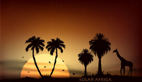 Sunrise over the African savanna giraffe and trees. Sunrise over the African savanna giraffe and palm trees Stock Images
