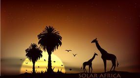 Sunrise over the African savanna giraffe and trees. Sunrise over the African savanna giraffe and palm trees Royalty Free Stock Photography