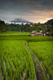 Sunrise over the Bali Rice Fields. Some of the most beautiful and dramatic rice terraces can be found near the small village of Sidemen in eastern Bali Royalty Free Stock Image