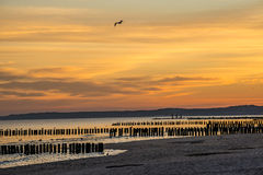 Sunrise over the Baltic Sea. With groynes Royalty Free Stock Photo