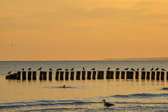 Sunrise over the Baltic Sea Royalty Free Stock Photography