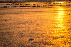 Sunrise over the Baltic Sea. With groynes Royalty Free Stock Photography