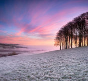 Sunrise over Beech Trees Stock Images
