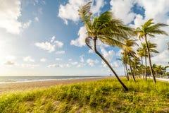 Sunrise over bent palm on Miami beach, Florida, United States of America stock photo