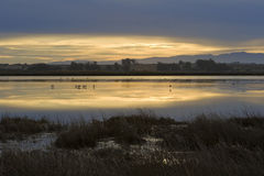 Sunrise over the Berg River. Water birds feed in the shallow water of the Berg River, near Velddrif, on the West Coast of South Africa, as the sun rises Stock Photos