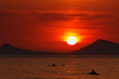 Sunrise over the Black Sea. Silhouettes of the dolphins at dawn. Stock Image
