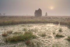 Sunrise over bog in dense fog Royalty Free Stock Image