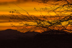 Sunrise over Bradshaw Mountains, Sonoran Desert, Arizona, USA. Sunrise through bare tree branches over Bradshaw Mountains in the Sonoran Desert of Arizona, USA Royalty Free Stock Photos