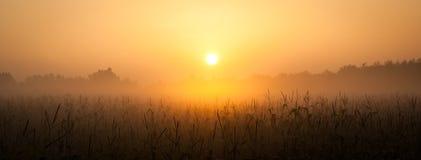 Sunrise over corn field Stock Photos