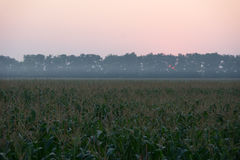 Sunrise over the corn field Royalty Free Stock Photo