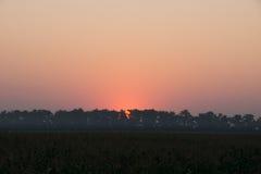 Sunrise over the corn field. Sunrise corn mist brightening pure sky Stock Image