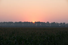 Sunrise over the corn field Royalty Free Stock Photos