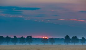 Sunrise over corn fields and distant trees alley Stock Photos