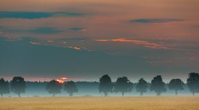 Sunrise over corn fields and distant trees alley Royalty Free Stock Photo