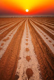 Sunrise over the cotton field Stock Images