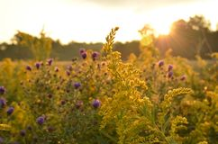 Sunrise over country field and roadside flowers Stock Photography