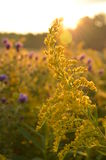 Sunrise over country field and roadside flowers Stock Images