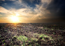 Sunrise over the cultivated field Stock Photos