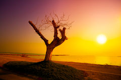 Sunrise over Dead Sea Royalty Free Stock Images