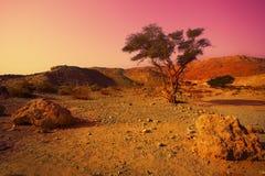 Sunrise over desert Royalty Free Stock Image