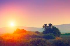 Sunrise over desert Royalty Free Stock Images