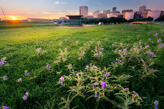 Sunrise Over Downtown Fort Worth. Stunning summer sunrise over a large field containing meadow pink wildflowers fronting downtown Fort Worth, TX royalty free stock image