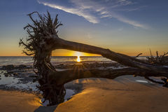 Sunrise Over Driftwood Beach - Jekyll Island Stock Photo