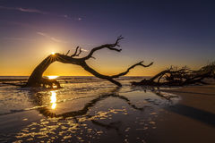 Sunrise Over Driftwood Beach - Jekyll Island Royalty Free Stock Photography