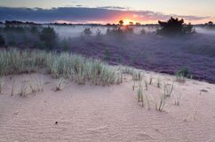 Sunrise over dunes and heather meadows Royalty Free Stock Photography