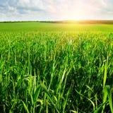 Sunrise over  field Stock Image