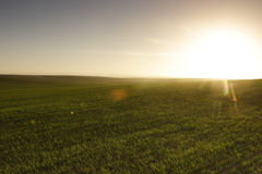 Sunrise over the field Royalty Free Stock Image